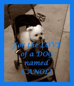 For the LOVE of a DOG named CANOLI